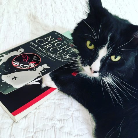 All the cool cats are reading The Night Circus